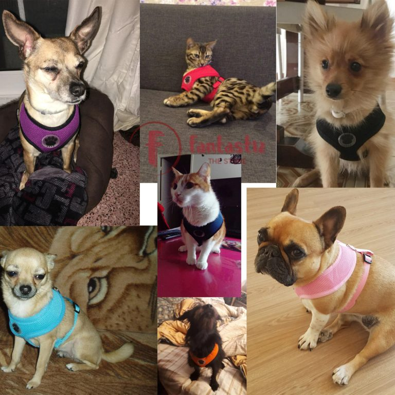 Photos of pets wearing Pet Vest Harness from Fantastiz
