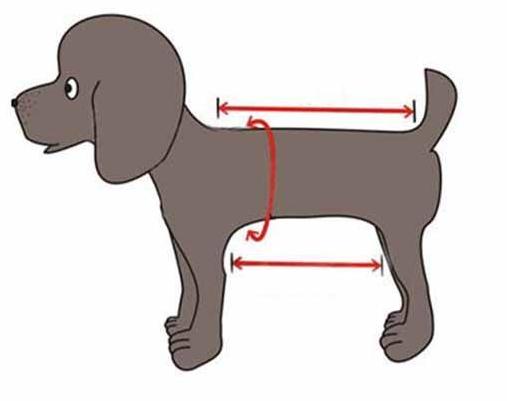 Dog measurement